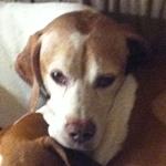 Popeye (Chappy)